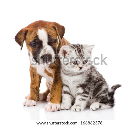 Scottish kitten and puppy looking away. isolated on white background - stock photo