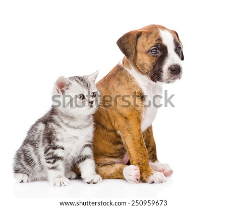 Scottish kitten and puppy sitting in profile and looking away. isolated on white background