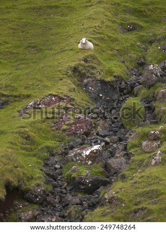 Scottish landscape with sheep in Skye isle. Quiraing. Scotland. UK. Horizontal - stock photo