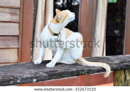 scratching cat  - stock photo