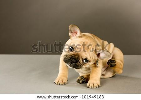 Best Dog Flea Shampoo For  Week Old Puppy