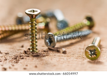 screws screwed in wood with wood shavings - stock photo