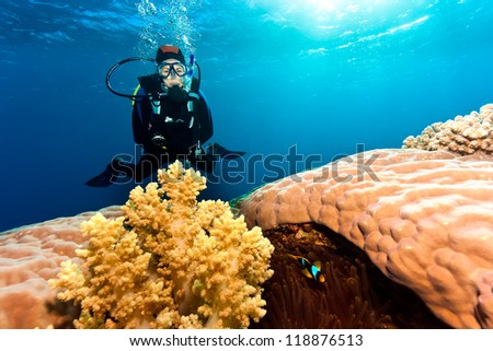SCUBA diver and anemone fish next to soft and hard corals