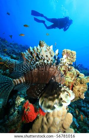 Scuba Diver and Lionfish - stock photo