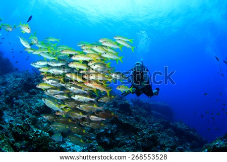 Scuba diver and school of fish (Yellowfin Goatfish)