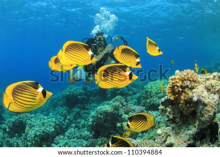 Scuba Diver and Tropical Fish (Butterflyfish) on coral reef - stock photo