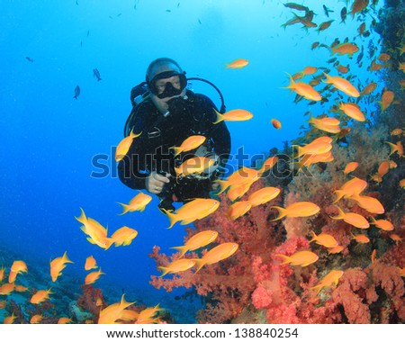 Scuba Diver explores coral reef with tropical fish underwater - stock photo