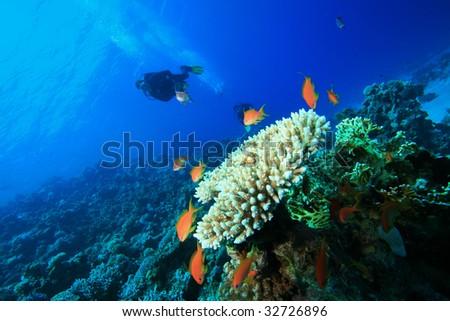 Scuba Diver exploring coral reef - stock photo