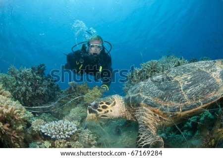 scuba diver looks at Turtle underwater - stock photo