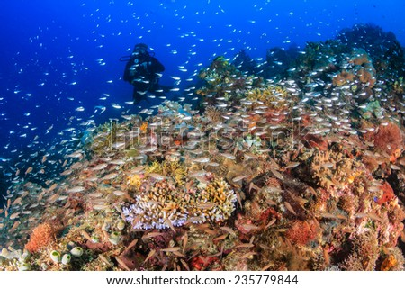 SCUBA diver on a coral reef surrounded by colorful tropical fish - stock photo