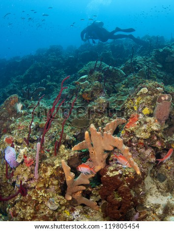Scuba Diver on a St. Lucia Reef with fish - stock photo