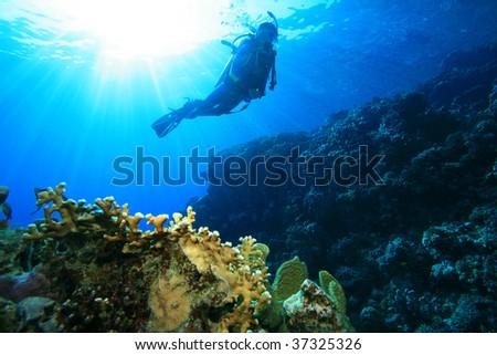 Scuba DIver on a sun lit reef - stock photo