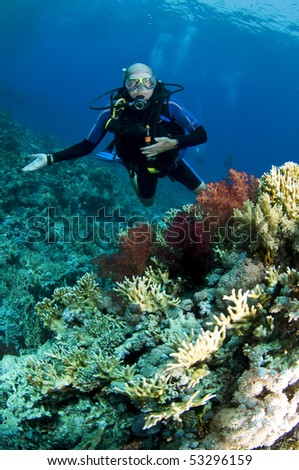 scuba diver on red sea reef