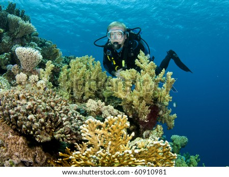 Scuba Diver on tropical reef