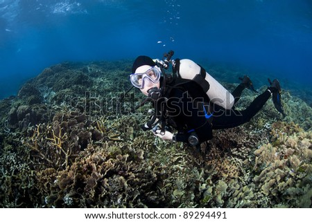 Scuba diver over a field of corals at the Valley of the Kings Dive Location off the island of Roatan, Honduras. - stock photo