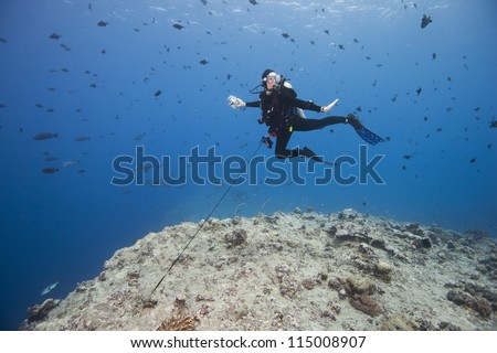 Scuba diver using a reef hook to watch sharks and other fish in the strong currents of the world famous Blue Corner dive site off the islands of Palau in Micronesia.