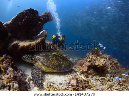 Scuba diver watching a sea turtle having rest among corals of tropical reef - stock photo