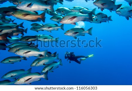 SCUBA Diver with a camera in the middle of a large school of fish