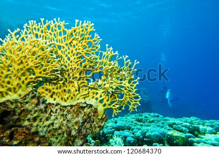 scuba diver with coral - stock photo