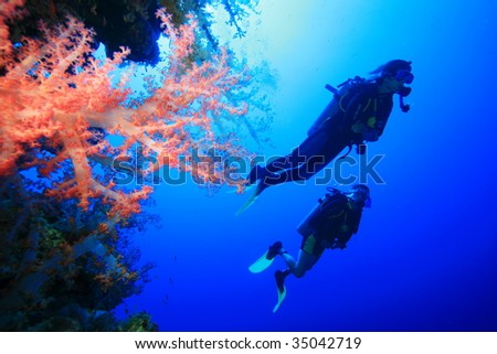 Scuba Divers and Colorful Soft Corals in the Red Sea - stock photo