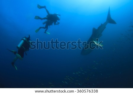 Scuba divers and whale shark - stock photo