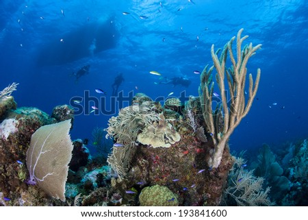 Scuba divers explore a beautiful coral reef in the Caribbean Sea on the island of Grand Cayman. Cayman is a popular destination for diving, snorkeling, and beach lovers. - stock photo