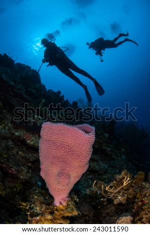 Scuba divers explore a coral reef growing near the island of Grand Cayman. Colorful sponges are common animals found on Caribbean reefs. - stock photo