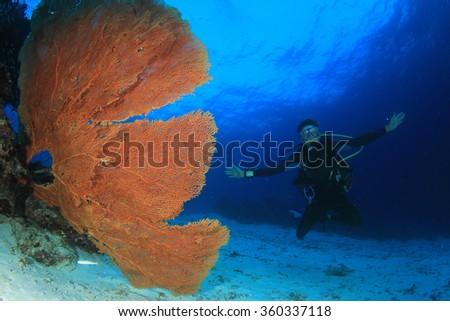 Scuba divers explore coral reef - stock photo