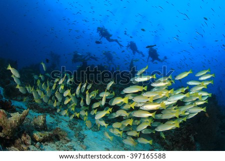 Scuba divers explore coral reef with fish - stock photo