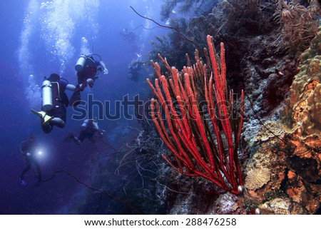 Scuba divers explore the plunging wall known as the Blue Edge and the reefs of Curacao, Dutch Caribbean. - stock photo