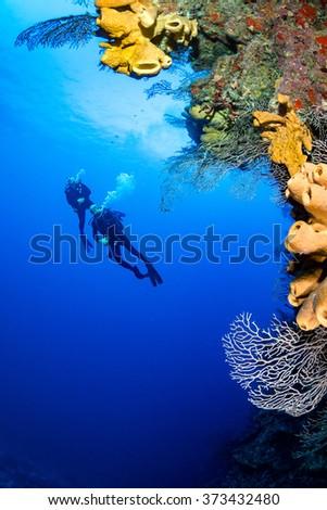 SCUBA divers exploring a deep, vertical coral wall - stock photo