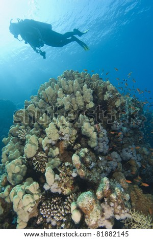 Scuba divers exploring a stunning tropical coral reef scene - stock photo
