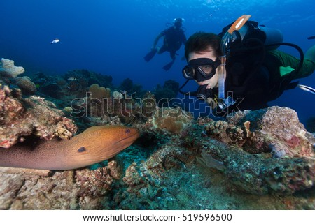 SCUBA divers in bright clear water looking at a giant moray eel at the tropical coral reef