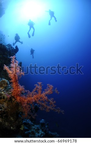 scuba divers swim on a wall in the red sea with bright red coral