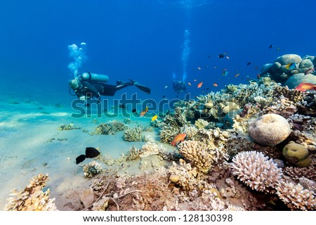 Scuba divers swim over a coral reef - stock photo