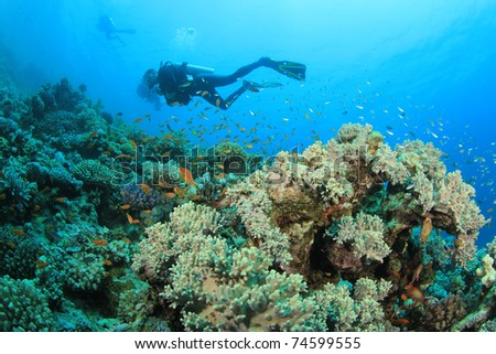Scuba divers swim over colorful Coral Reef