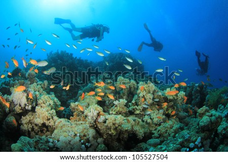Scuba divers swim over coral reef in the Red Sea