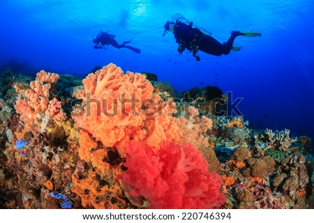 SCUBA divers swim over vividly colored soft corals on a tropical reef - stock photo