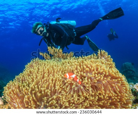 SCUBA divers swimming over a large anemone with clownfish on a tropical coral reef - stock photo