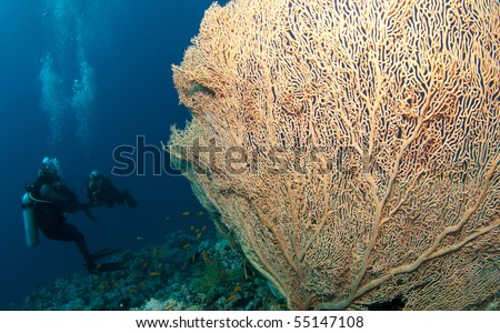 scuba divers with big sea fan - stock photo