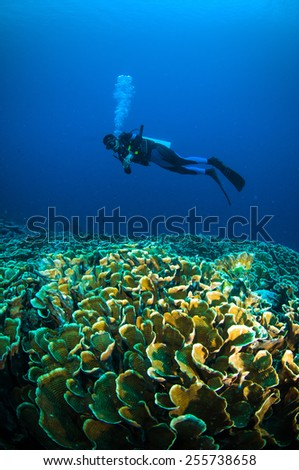 scuba diving above coral below boat bunaken sulawesi indonesia underwater photo - stock photo