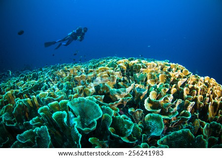 scuba diving above coral below boat bunaken sulawesi indonesia underwater photo