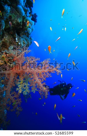 Scuba Diving beside a reef wall in the Red Sea