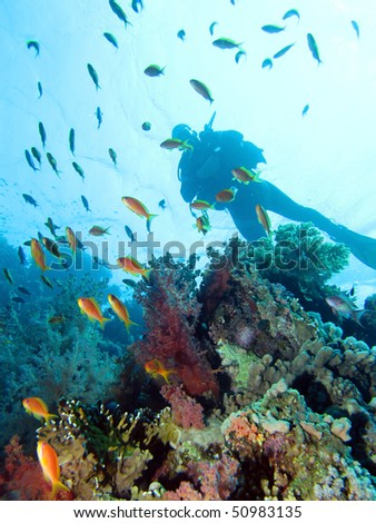 Scuba diving in Coral reef, Red Sea.