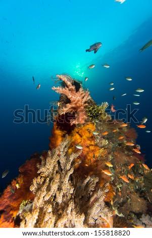 Scuba diving in komodo - stock photo