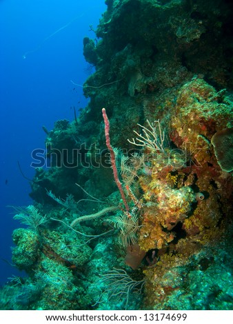 Scuba Diving off the wall in Cayman Brac - stock photo
