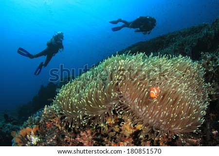 Scuba Diving on coral reef with Anemone and Nemo Fish