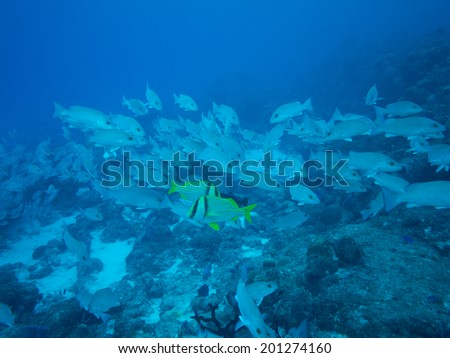 Scuba diving on coral reefs in mexico - stock photo