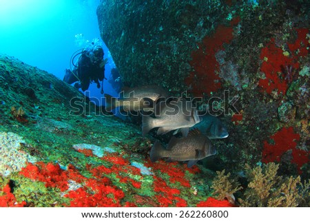 Scuba diving with fish - stock photo
