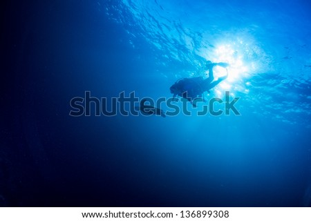 scuba diving with Sea turtle  under water